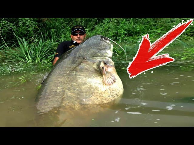 ТОП 10 Самых Больших Рыб из Наших Рек Аномальные Речные Монстры Пойманные Человеком