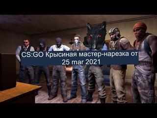 CS:go Крысиная мастер нарезка 25 mar 2021 за терроройдов! best moments