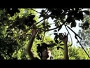 Burt's Bees presents Music from Nature by Diego Stocco