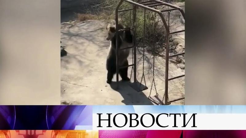 Медведица из китайского зоопарка стала звездой Интернета
