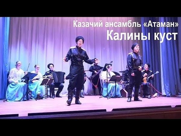 Песня Калины куст Казачий ансамбль Атаман