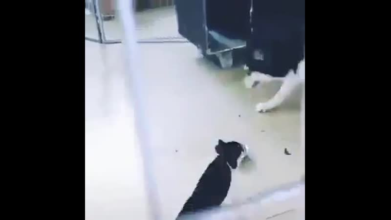 Кот показал кто в доме хозяин