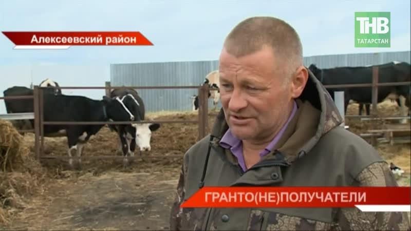 98 фермеров Татарстана не получили выигранные гранты по программе «Агростартап» - ТНВ