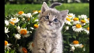 КОТИКИ И ДРУГИЕ МИЛЫЕ ЖИВОТНЫЕ.Cats and cute animals.