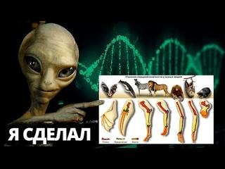 Единый шаблон проектирования организмов  Как боги создали людей и животных