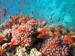 Подводные жители Красного моря The BEST 2011
