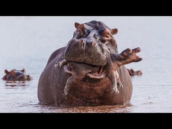 10 Самых ужасных матерей в мире животных
