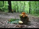 Baumbestattung im Wald der Ewigkeit Naturbestattung Zadrobilek