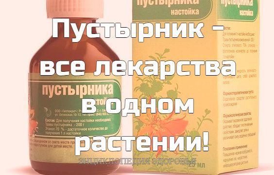 Пустырник - все лекарства в одном растении!