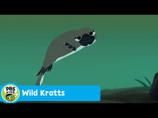 WILD KRATTS | Platypus Super Sense Discovered | PBS KIDS