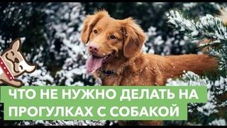 Что не нужно делать на прогулках с собакой. Правила выгула собаки
