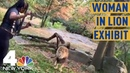 Woman Climbs Into Exhibit at Bronx Zoo Taunts Lion NBC New York
