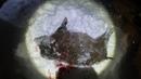 Охота на кабана с вышки ноябрь 2020г.