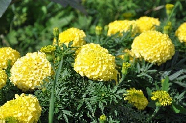 С такими подкормками ваши цветы будут расти, как...
