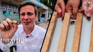 Как Дмитрий Комаров таракана съел и устроил тараканьи бега. Китай. Мир наизнанку 11 сезон 10 серия