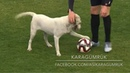 Canine interruption: How a dog brought a football match to a halt