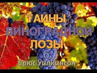 Б.УИЛКИНСОН - ТАЙНЫ ВИНОГРАДНОЙ ЛОЗЫ - 6 ЧАСТЬ