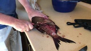 Обзор рыбацких ножей: тестирование на рыбе