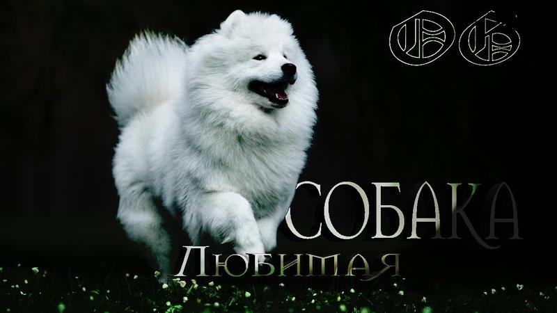 Моя любимая собакаЙ OPTI MUS Музыкальная версия Дима Губанов