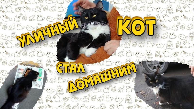 Трогательное видео мимимишного кота. История спасения с улицы. Лучшие моменты.