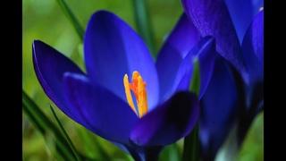 ЛЕВ таро прогноз с 12-18 апреля 21г. (финансы и любовь). #гаданияонлайн