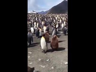 Пингвины. Два профессора и студенты