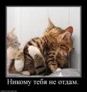 Фотоальбом Александра Приходько
