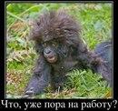 Фотоальбом Артёма Василевского