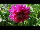 мои цветочки под музыку *** С Днём Рождения доченька Мы тебя любим наша радость счастье солнышко Твои мама и папа Picrolla