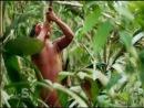 В самом сердце джунглей: племена. Туроператор РуКолумб. rucolumb