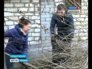 Архангельские волонтёры в канун Юбилея Победы приводят в порядок городские дворы