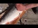 Так поморы солят сёмгу / Know how the local people of White sea area salt the salmon