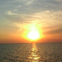 Чайка Море