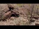 42. Выжить любой ценой - Пустыня Техас