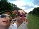 Crab bites nose Краб кусает за нос
