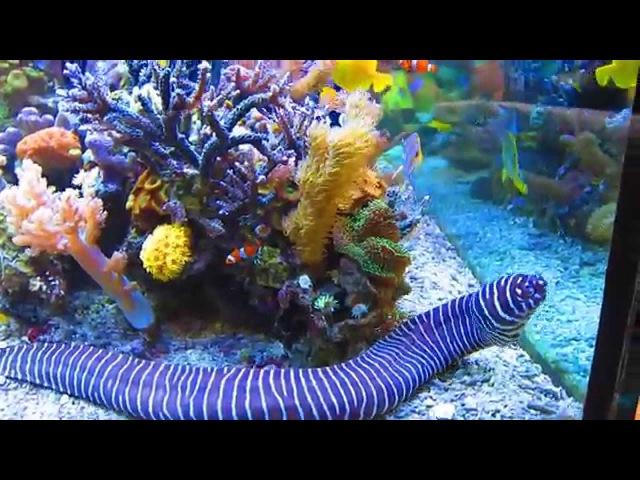 Dormero Rotes Ross June 2013 Hotel Reef Aquarium