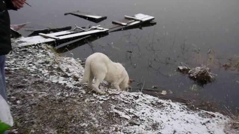 начало зимы на озере Мадалаярви, Хиттолово