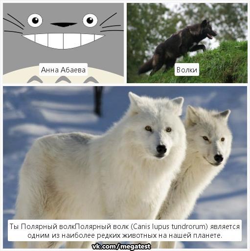 тесты про волков в картинках газет