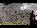 Чистота озера Ворожеска