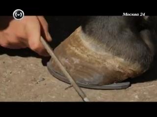 Познавательный фильм_ московская конная полиция