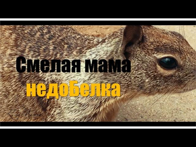 Смелая МАМА недоБЕЛКА KinoMama