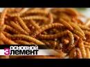 Наука против голода. Съесть несъедобное | Основной элемент