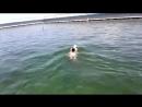 Бог дарував нам чудових друзів у воді