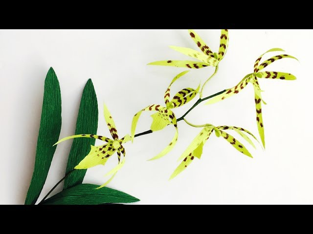 ABC TV How To Make Brassia Orchid Paper Flower From Crepe Paper Craft Tutorial