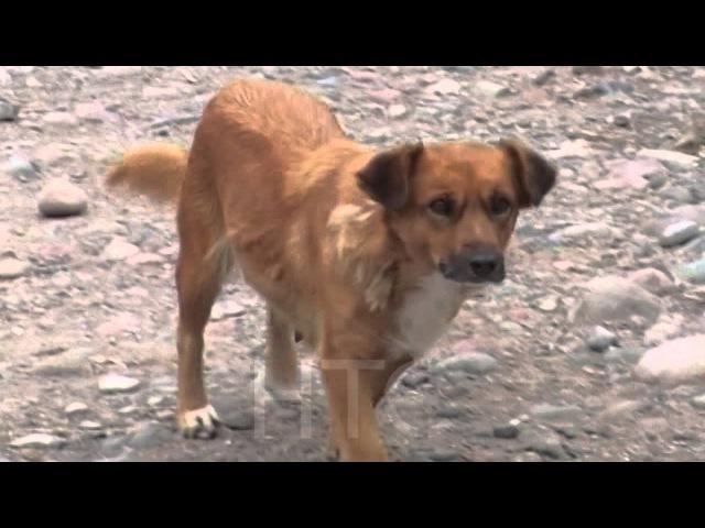 Отстрел бродячих собак это жестокость или необходимая мера