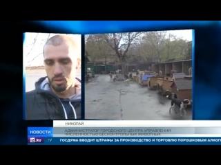 В Ростове обнаружили сотни мертвых животных