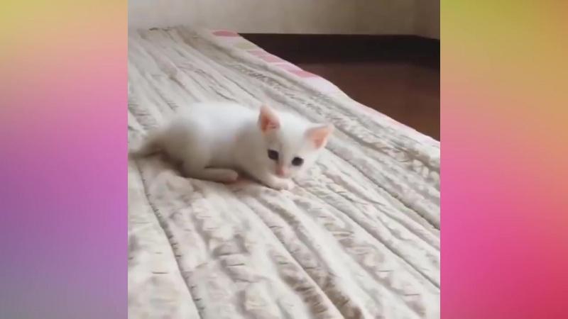 Забавные и милые коты - Самое пушистое и умилительное видео