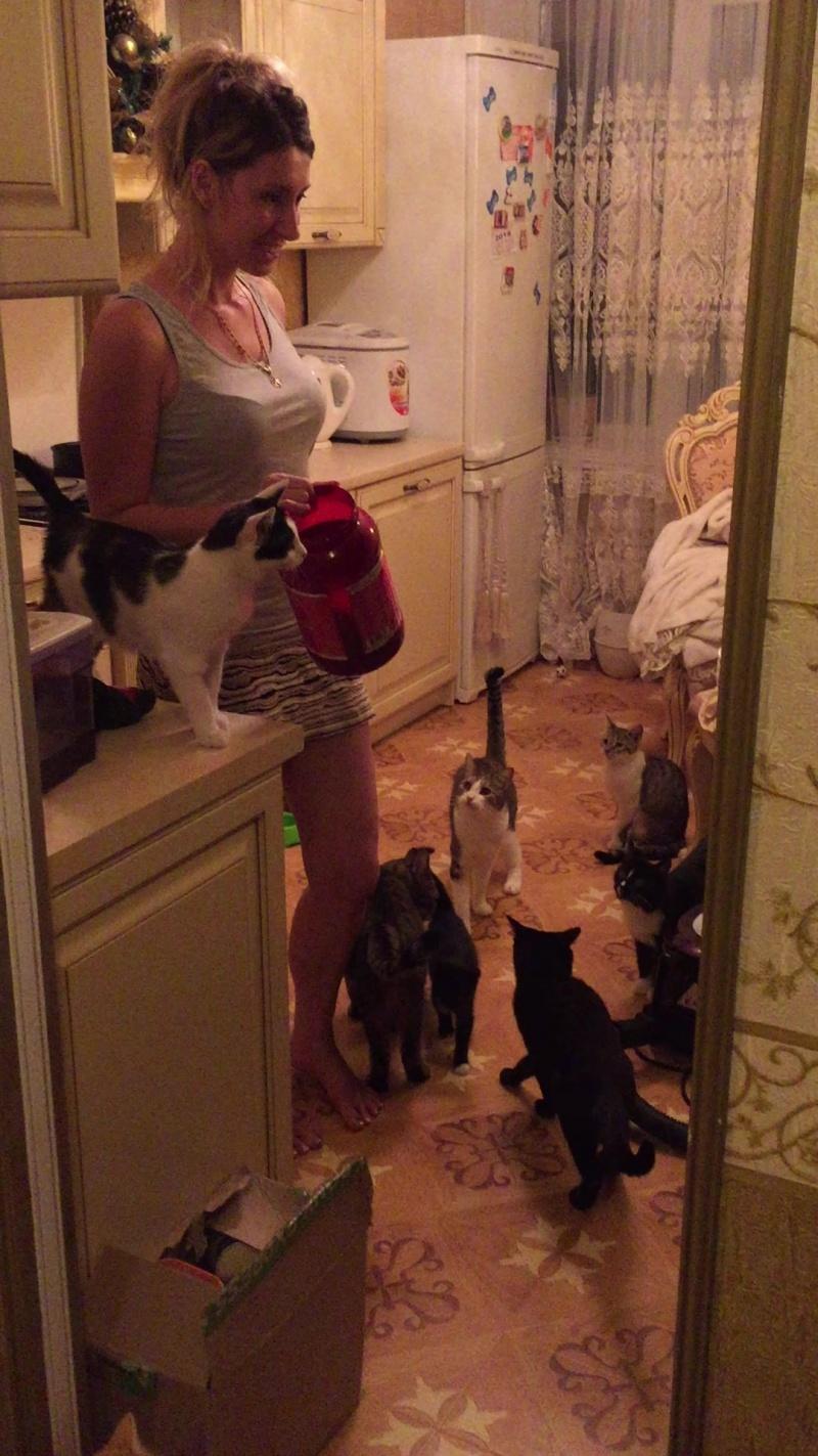 Кормление 17 кошек