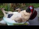Попробуй не засмеяться самые лучшие смешные видео приколы на ютубе до слез
