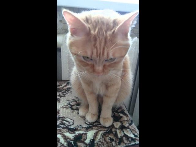 Кот Мурзик разговаривает и ложится спать